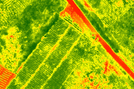 Multispectral aerial image of the farm field. Green areas signify better plant health.