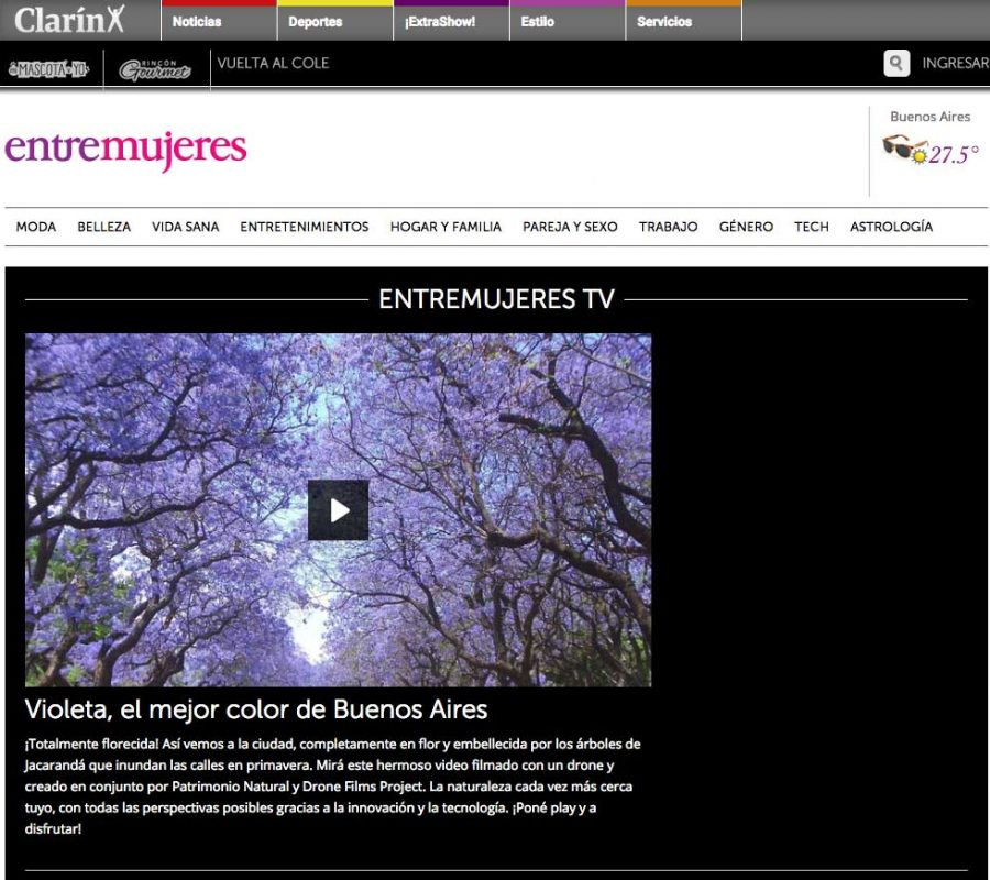 Video Jacarandas