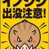 岡山市でイノシシ出没に注意!で思い出した出来事。