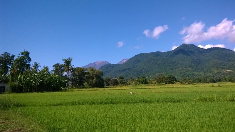 A volcano amongst rice fields