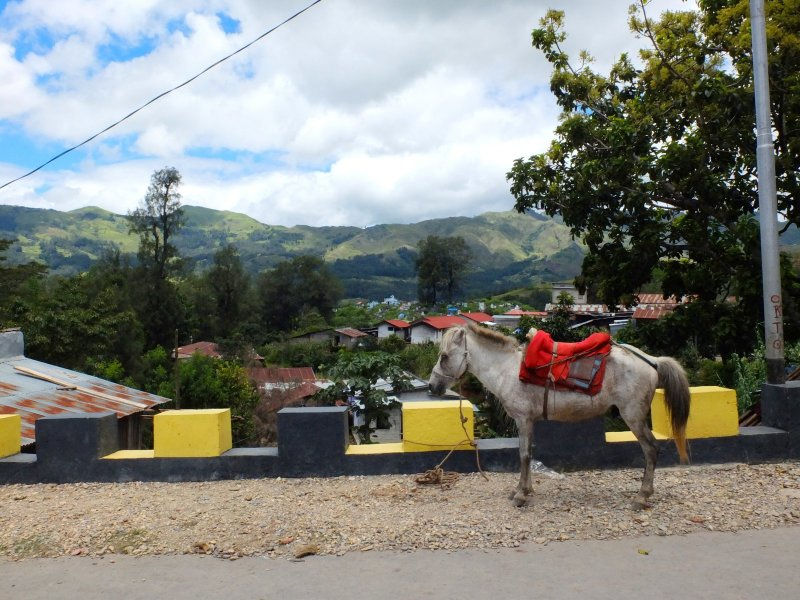 Main street, Maubisse: using horses for transport is common in the districts of Timor-Leste. Cars and motorbikes are in-affordable and a horse beats walking. Many people walk long distances, if they have no horse.