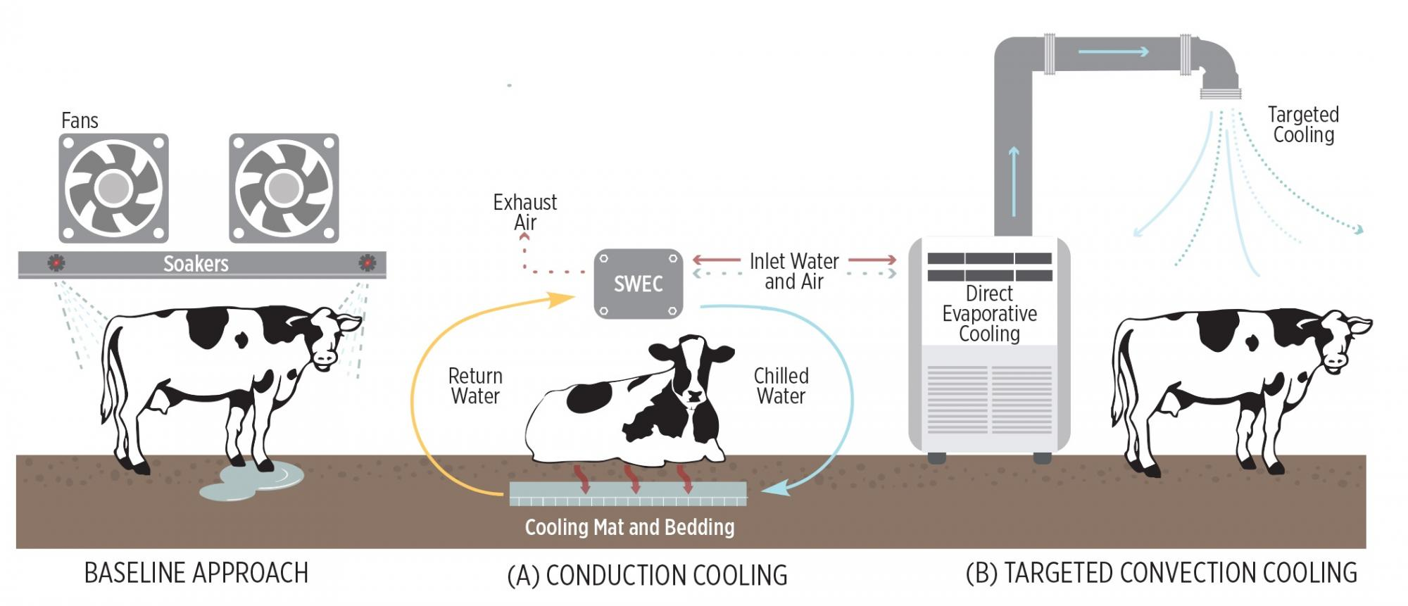 19. Evaporative Chiller Conduction Cow Cooling (1)