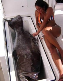 Giant fish and girl