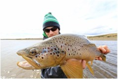 Brown trout close-up