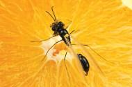 Best fly patterns