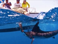 Marlin fishing in Baja Mexico