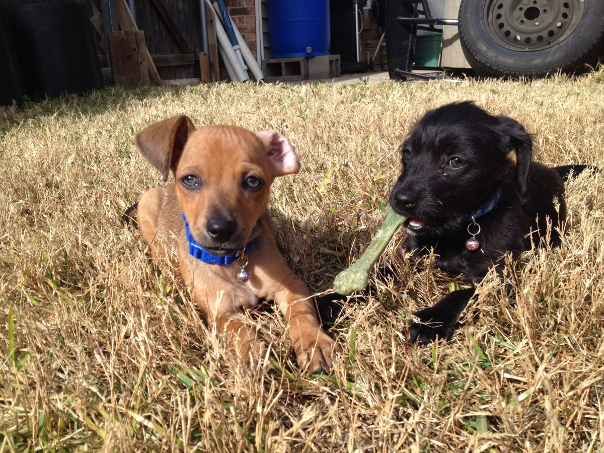 89  Lessons I've learned from my puppies- the first three weeks