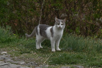 Cute kitty out hunting