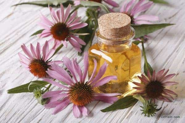 Fragrant medical tincture of Echinacea purpurea closeup