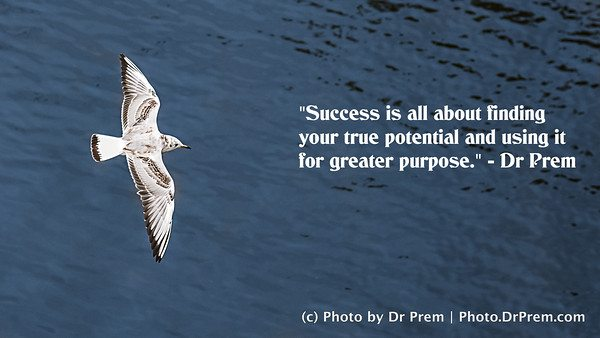 Success is about finding your true potential and using it for be