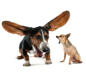 big ear dog and shouting dog