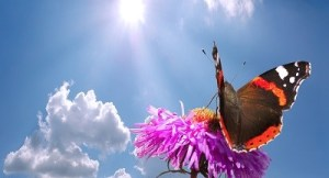 butterfly on flower against sky