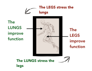 Cycle of Stress Exercise