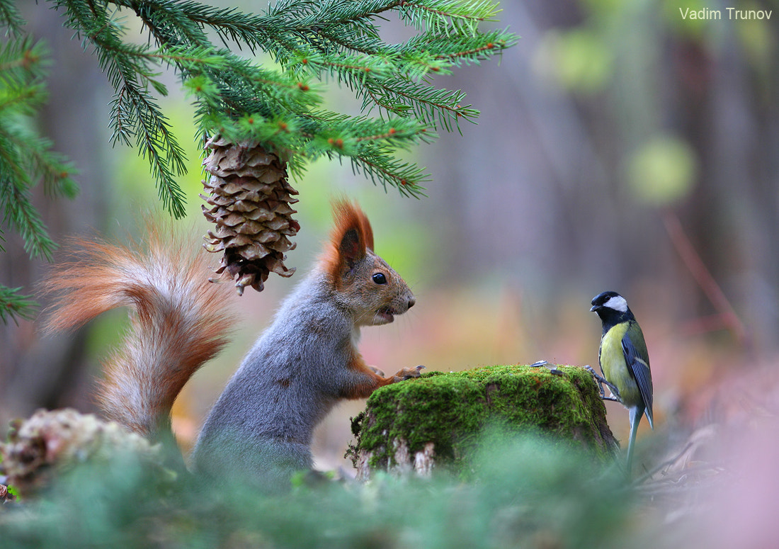 Vadim Trunov Vadimtrunov Photos 500px