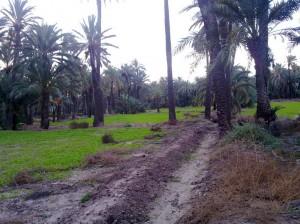 Arranca el día con barro y brotes verdes en el huerto de palmeras