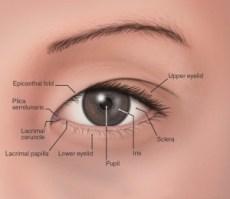El ojo oriental, detalles