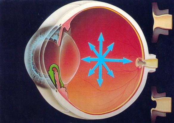La presión interna (flechas azules) se transmite al punto más debil, el nervio óptico