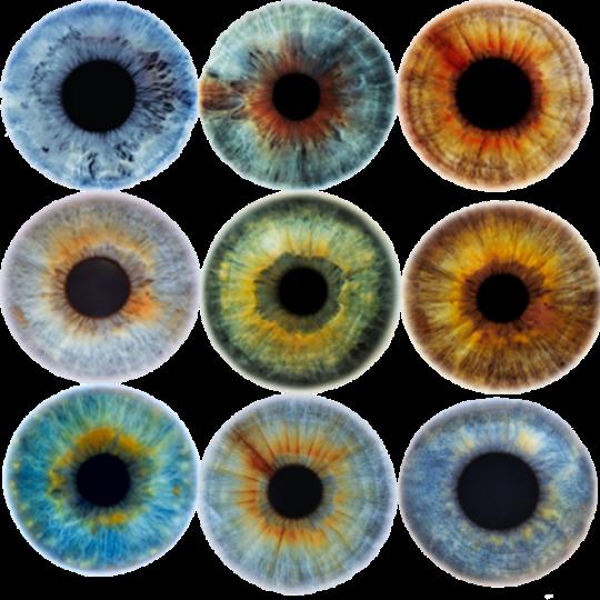 Colore Iris