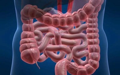Understanding Small Intestine Bacterial Overgrowth – Part 1