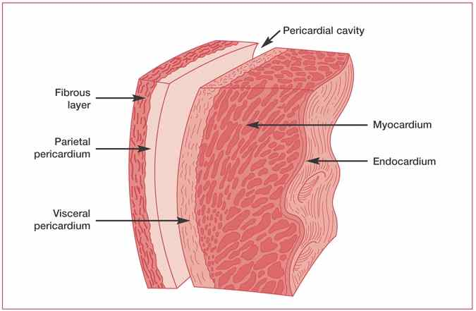 What is the mechanism of pericardial rub ? (2/2)