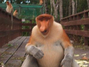 Lab Bay Proboscis Monkey Sanctuary