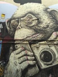 Photographic monkey