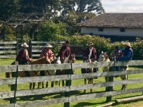 A group of llama farmers