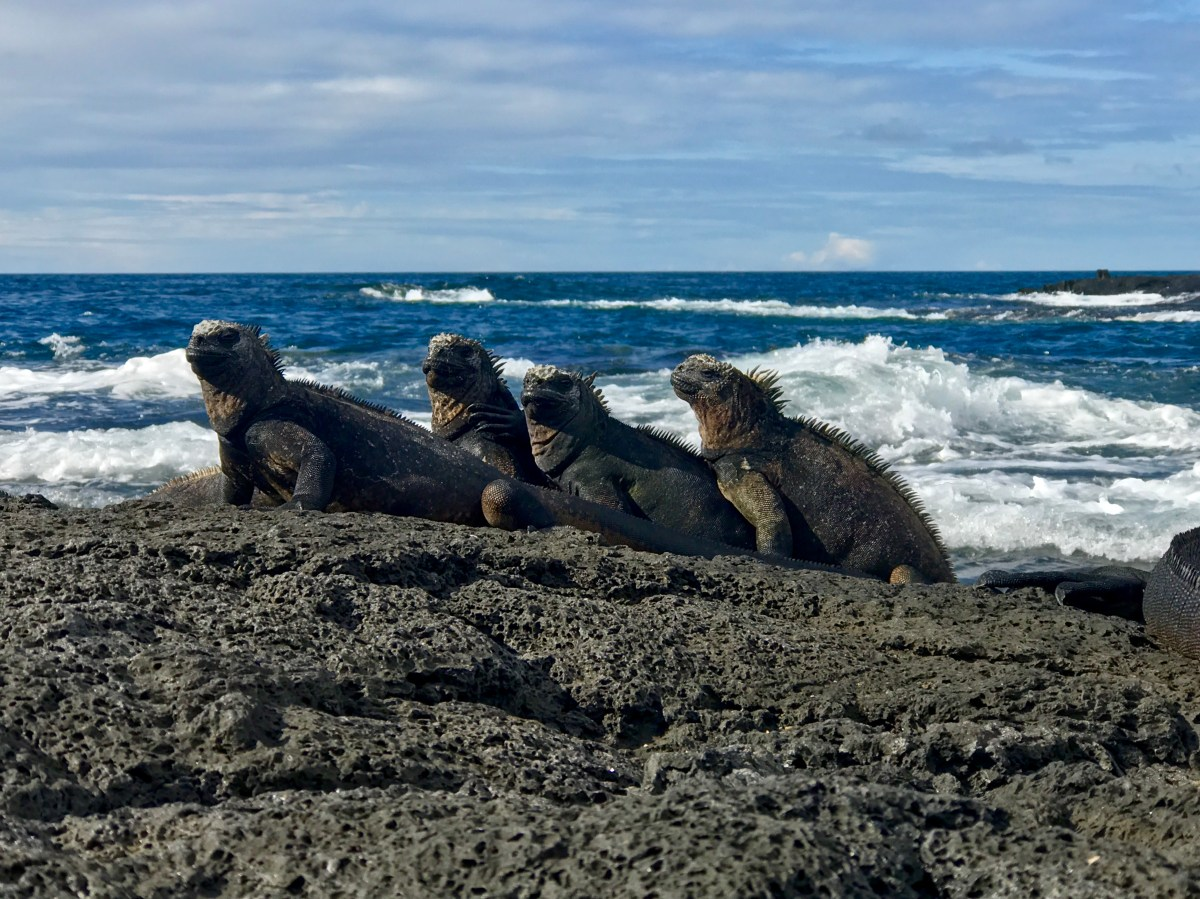 Ecuador, pt. 2: The Galápagos Islands