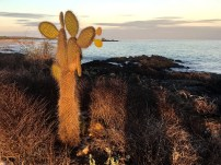 Cacti on the coast