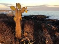 Cacti on the coast