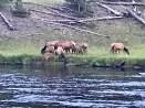 Some of them feeding