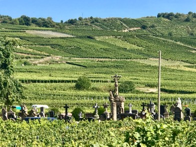 A cemetery in a vineyard