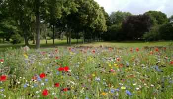 landscape photography of flower garden