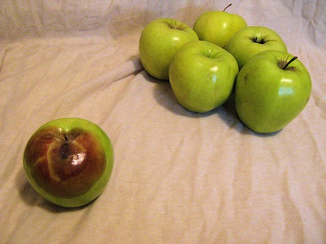 One bad apple really does spoil the bunch.