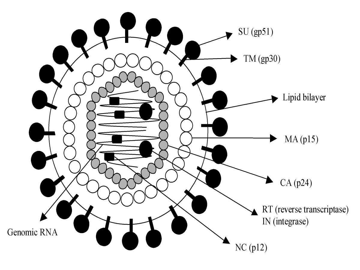 Viral Particle