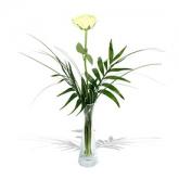 un-fir-de-trandafir-alb-mdg4qfh9v2