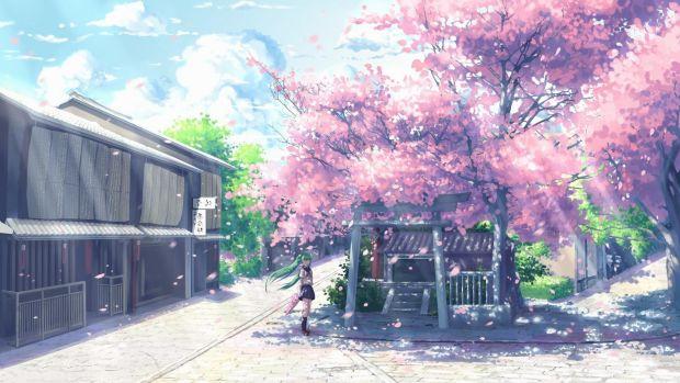 cherry blossom wallpapaer