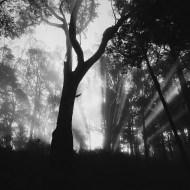Dom Perignon Plenitude P2-1998 Jaredchambers-Nature