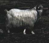 6. Yule Goat