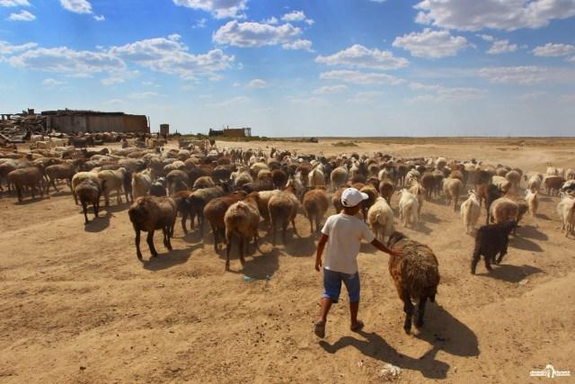 Казахская деревня. Пастух.