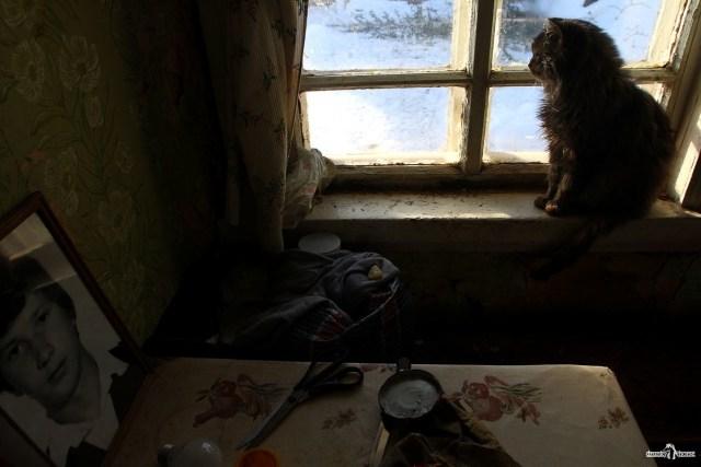 Кот у окна. Дом в деревне