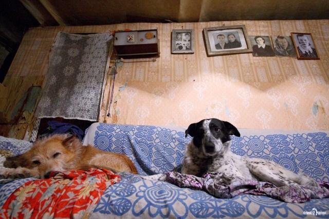 Деревенская история. Собаки и семейные фотографии
