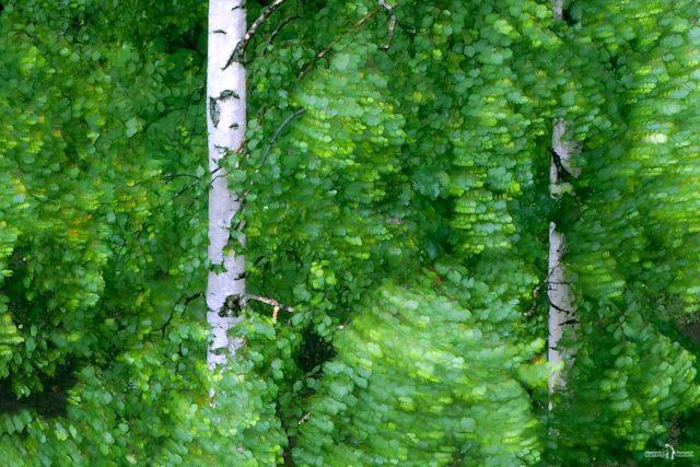Абстрактный кадр с листвой