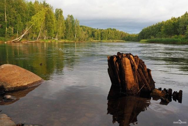 Старая свая в реке. Карелия