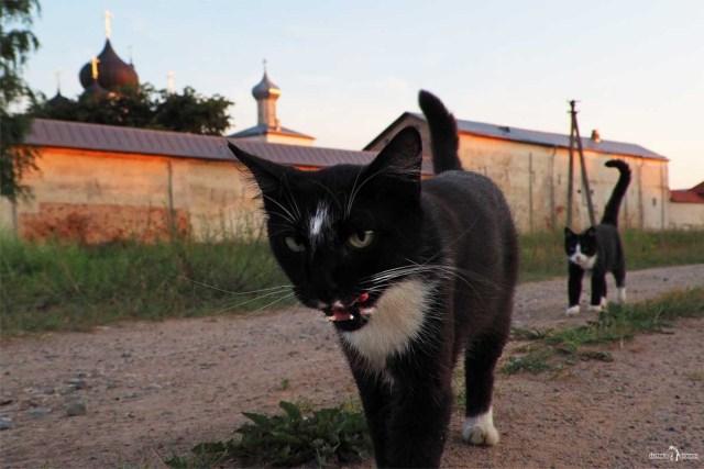 Коты Зеленецкого монастыря