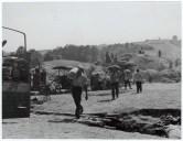 Logor Jasenovac, žetva na logorskoj ekonomiji