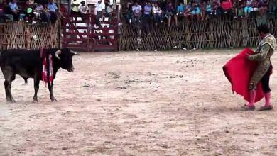 Photo of Lázaro Cárdenas permite corridas de toros y peleas de gallos
