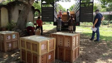 Photo of Rescatan 9 mil tortugas de tráfico ilegal a Quintana Roo y Yucatán