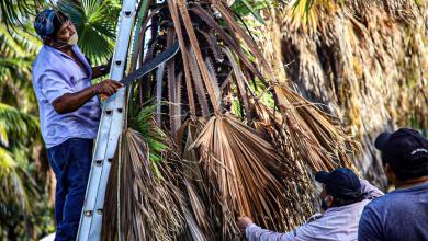 Photo of Se benefician colonos con el programa «Isla Mujeres Verde y Saludable»