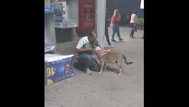 Photo of Perrito de la calle agradece su nueva casa de cartón  y se hace viral